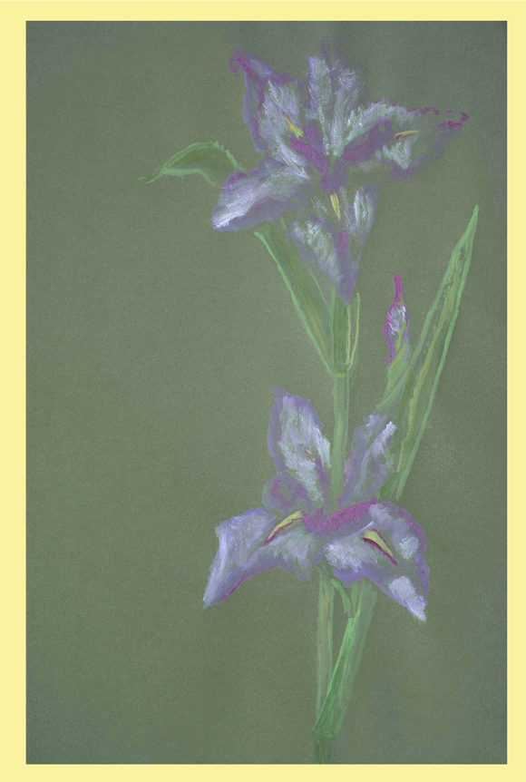 Watercolor of the Louisiana Iris Billy by Thibodaux Louisiana Artist Susan Talbot